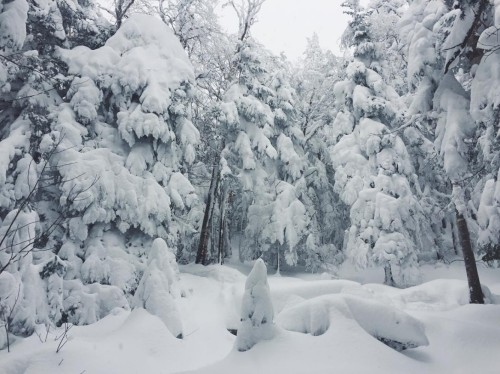 snow-on-trees